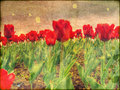 Tulips on Stained Paper Royalty Free Stock Photo