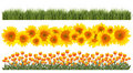 Tulips, Sunflowers and Grass Borders Royalty Free Stock Photos