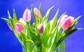Tulips in vase Royalty Free Stock Images