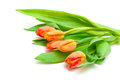 Tulips on white background bouquet of a horizontal photo Stock Photography