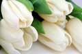 Tulips in white macro background Royalty Free Stock Photo
