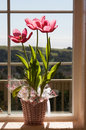 Tulips on window Stock Photography
