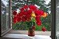 Tulips on windowsill. Stock Photography