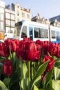 Tulpen In Amsterdam Met Een Tr...