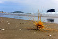 Tumbleweed on the beach Royalty Free Stock Photo