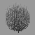 Tumbleweed drawing vector Royalty Free Stock Photo