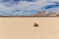 Lone weed on dry lake bed in desert Royalty Free Stock Photo