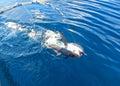 Tuna Catch Royalty Free Stock Photo