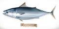 Tuna fish. 3d vector icon. Seafood