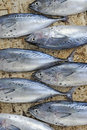 Tunafish at market Royalty Free Stock Image