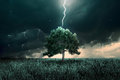 Tunder and lighting storm of over the alone tree Stock Photography