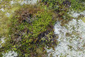 Tundra vegetation detail of top view Royalty Free Stock Photo