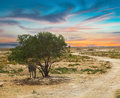 Tunisian landscape with lonely tree and donkey Stock Photo