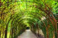 Tunnel of green plants Royalty Free Stock Photo