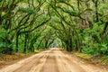 Tunnel of oaks, Botany Bay, South Carolina