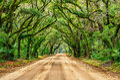 Tunnel of oaks botany bay south carolina summer greens along the at s Stock Photo