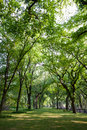 Tunnel of trees in central park area adjacent to the mall new york this image was taken the summer Royalty Free Stock Photography