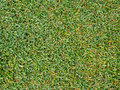 Turf grass texture the image of greem in top view close up Royalty Free Stock Photography