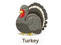 Turkey animal cartoon illustration for children
