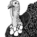 Turkey bird head as thanksgiving symbol for mascot or emblem design vector illustration for t shirt sketch tattoo design Royalty Free Stock Photo