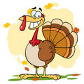 Turkey cartoon character Royalty Free Stock Photography