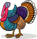 Turkey farm bird animal cartoon illustration Royalty Free Stock Photo