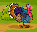 Turkey farm bird animal cartoon illustration of funny comic Stock Photo