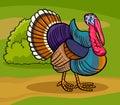 Turkey farm bird animal cartoon illustration