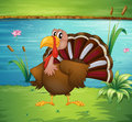 A turkey near the pond illustration of Royalty Free Stock Photography