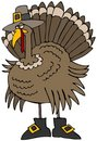 Turkey Pilgrim Stock Images