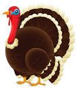 Turkey a plump thanksgiving or christmas standing Royalty Free Stock Photography