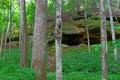Turkey Run Forest Indiana