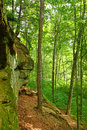 Turkey Run State Park Woodland Royalty Free Stock Photo
