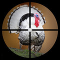The turkey in the scope hunter s hunting concept Royalty Free Stock Photos
