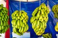 Turkish Anamur Bananas Royalty Free Stock Photo