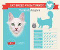 Turkish Angora Cat breed infographics