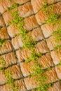 Turkish Baklava Royalty Free Stock Photo