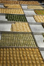 Turkish baklava in a shop various on trays Royalty Free Stock Photos