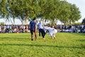 Turkmen wrestling in Istanbul Royalty Free Stock Photo