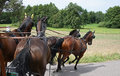 Turn with four horses in moravia countryside Royalty Free Stock Photo