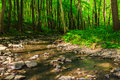 Turn stream in forest with stones an old green Royalty Free Stock Photography