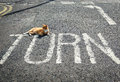 Turning point with cat on the road