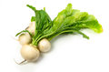 Turnip Royalty Free Stock Photo