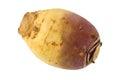 Turnip (Brassica rapa) Royalty Free Stock Photo