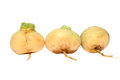 Turnips isolated three root vegetable of Royalty Free Stock Images