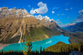 The turquoise lake Peyto in Banff National Park Royalty Free Stock Photo