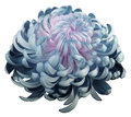 Flower Turquoise-pin  Chrysant...