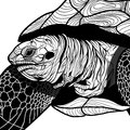 Turtle animal head symbol for mascot or emblem design logo vector illustration for t shirt sketch tattoo Royalty Free Stock Photos