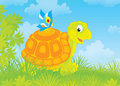 Turtle and butterfly funny tortoise walking with a small Stock Images