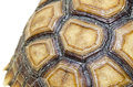 Turtle Carapace closed up picture. Royalty Free Stock Photo